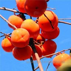 KINGDUO 100Pcs Graines De Géranium Panaché Géranium Fleurs Hiver Jardin De Bonsaïs En Pot Plantes-Peachpuff - B07DCJ6ZHX