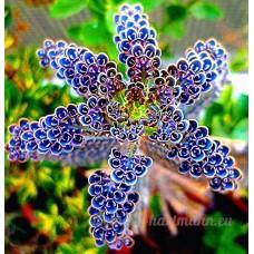 KINGDUO 100Pcs/Pack Japon Jonquil Fleurs Plantes Jardin Fleuri Longévité En Pot Bonsai Graines - B07DBWCPV7