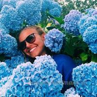 KINGDUO 20Pcs Hortensia Graines Vanille Fraise Graines De Fleurs Pour Extérieur Maison Plantation Bonsaïs-Bleu - B07DBWJK6F