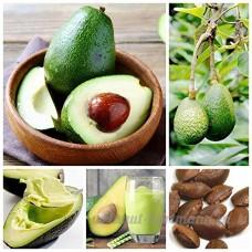 KINGDUO 10Pcs/Pack Avocat Graines Persea Americana Mill Poire Semences Diy Santé Salade De Fruits - B07D8MTR4Y