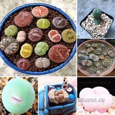 KINGDUO 100Pcs Graine Lithops Pseudotruncatella Plante Semences Rare Pot De Pierre Succulentes Mélange - B07D8J32P2