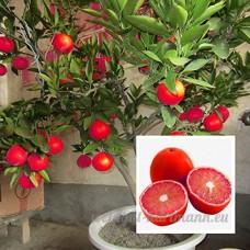 KINGDUO 20 Pcs/Pack Couleur Rouge Citron Graines Drawf Arbre Bonsaï Jardin De Maison Bio Fruits Graines Plantes - B07D75YMPH