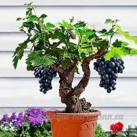 KINGDUO 50Pcs/Pack Vigne Graines Bio Fruits Sucrés Plein Air Semences Les Plantes Grasses  Indoor Bonsai-3 - B07D6M5LFC
